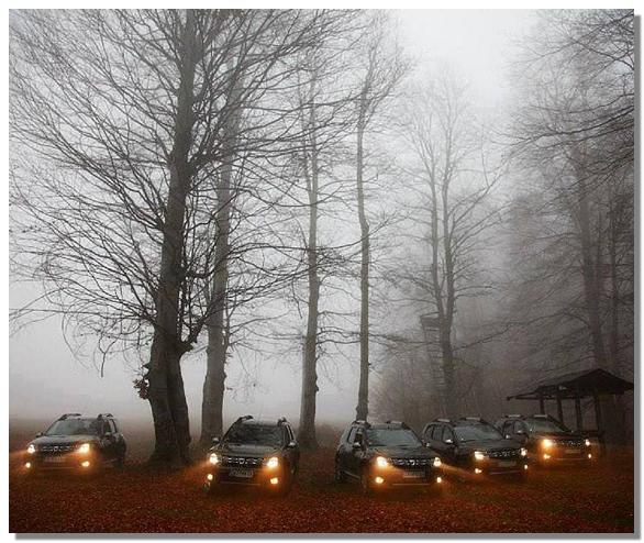 фото рено дастер лес